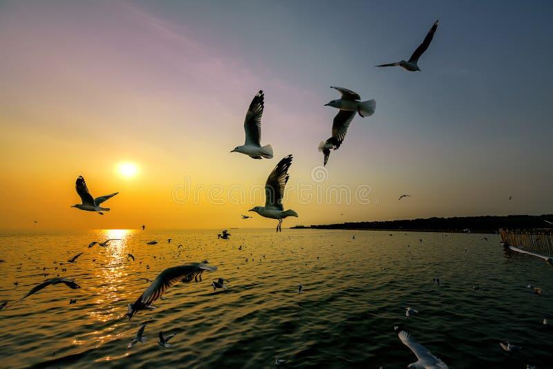 Seagullsna flyger för mat och solnedgången på den Bangpur stranden i Thailand royaltyfri foto