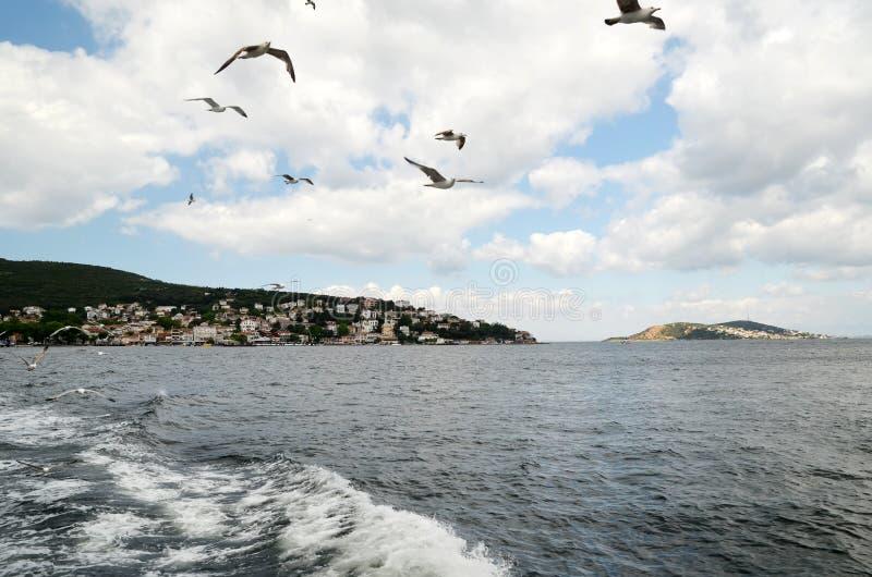 Seagullsna flyger nära folk på en färja nära prins`-öarna i Istanbul royaltyfria foton