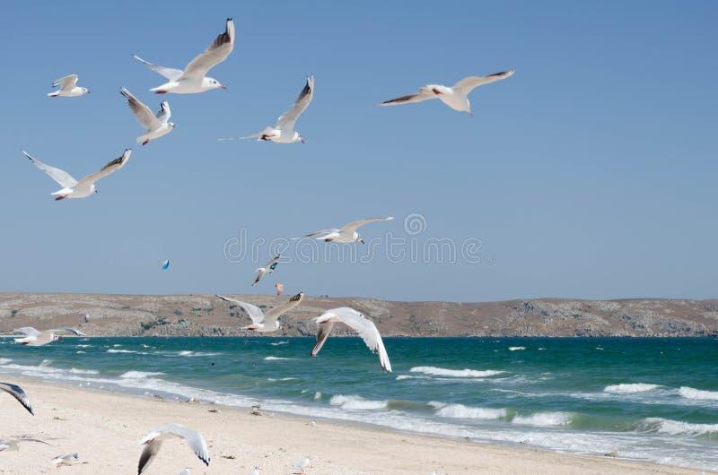 Seagullsna på bakgrunden av ett marin- landskap arkivfoton