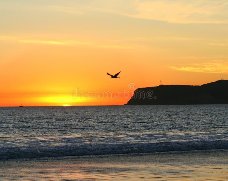 Download Seagullsolnedgång arkivfoto. Bild av solnedgång, skymning - 522332