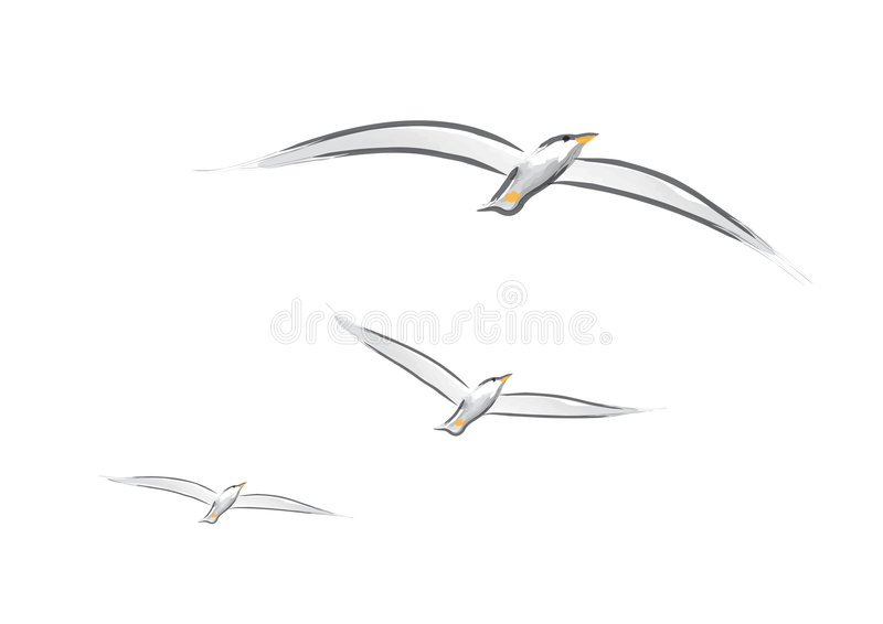 seagullsvektor stock illustrationer