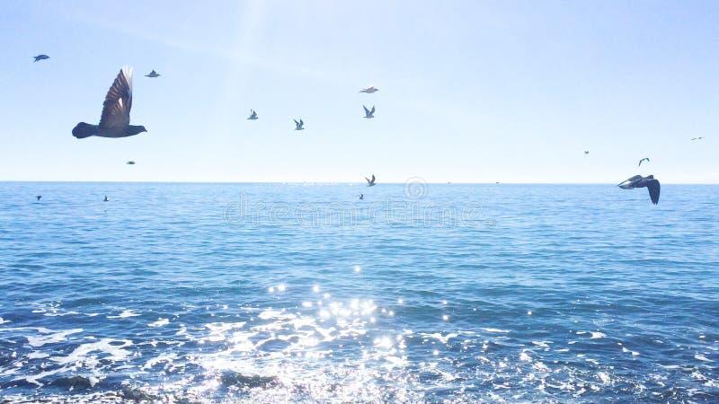 Seaguls και περιστέρια flyins πέρα από τη θερινή θάλασσα στοκ εικόνα