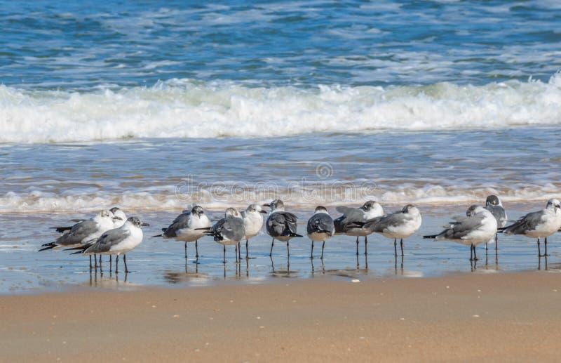 Seaguls που στέκεται σε μια γραμμή από τον ωκεανό στοκ φωτογραφίες