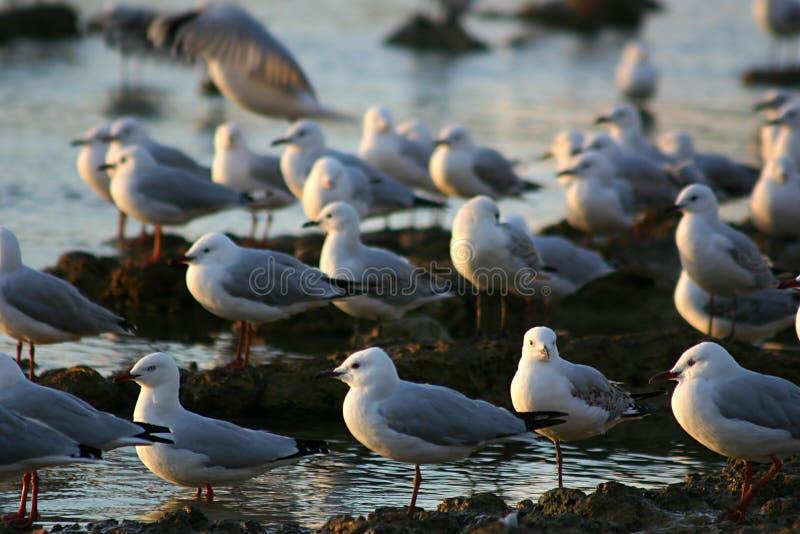 Seaguls Stock Photo