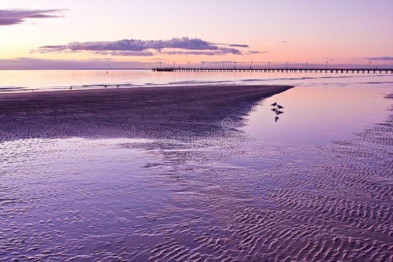 Seaguls s'est reflété dans les eaux de marée basse images libres de droits