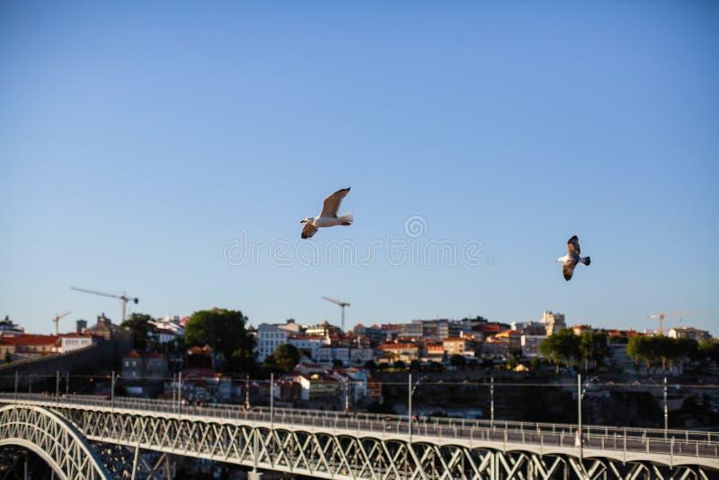 Seaguls sobre el puente de Dom Luis I en Oporto fotografía de archivo