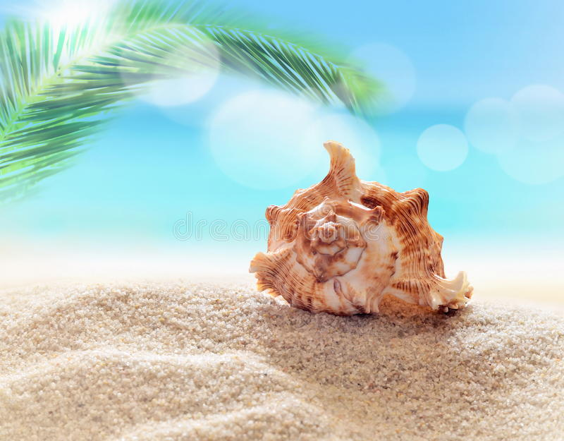 Seahell on the beach. Seahell on the sandy beach and palm stock image
