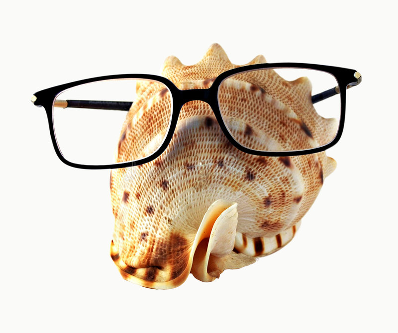 Seahell in eyeglasses. A white seahell in black eyeglasses stock photos