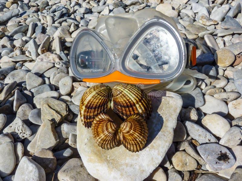 Seahells et masque de mer image libre de droits