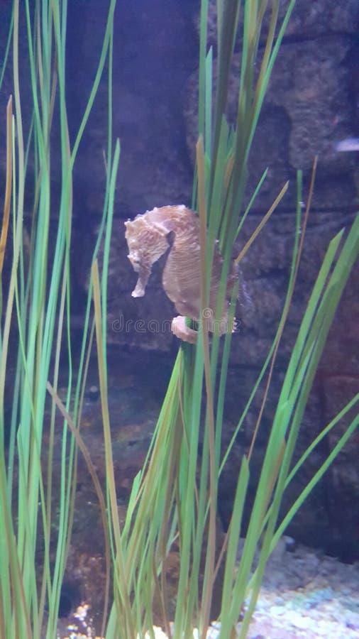 seahorse стоковые фото