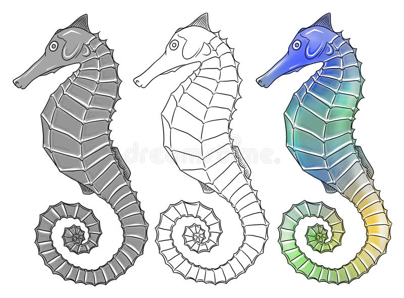 Download Seahorse stock illustration. Illustration of seahorse - 27145266