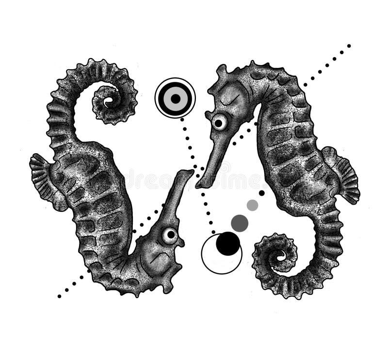 seahorse stockfotos