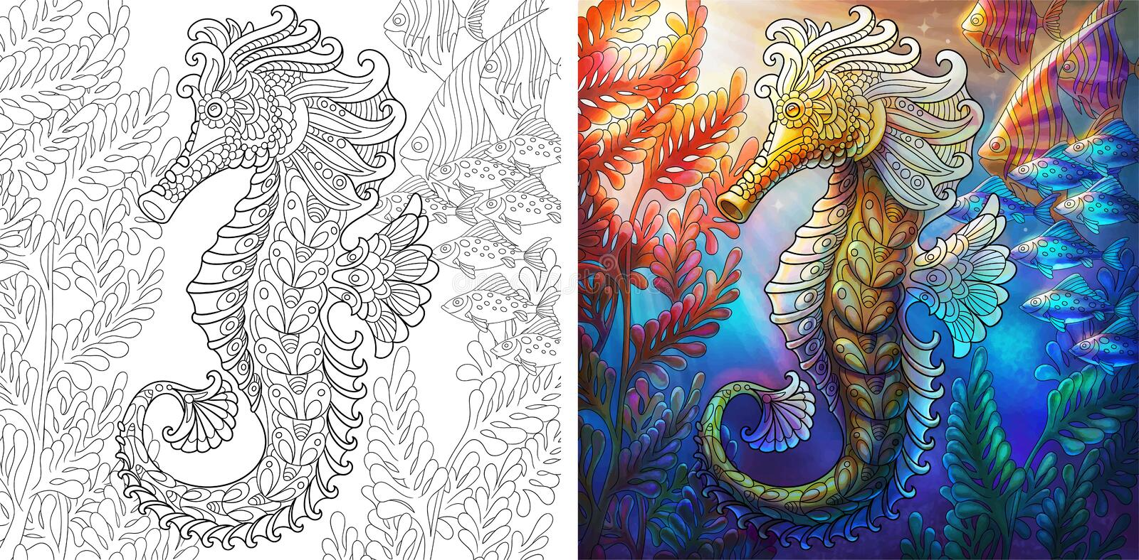 Seahorse Colorless And Color Samples Stock Vector - Illustration of ...