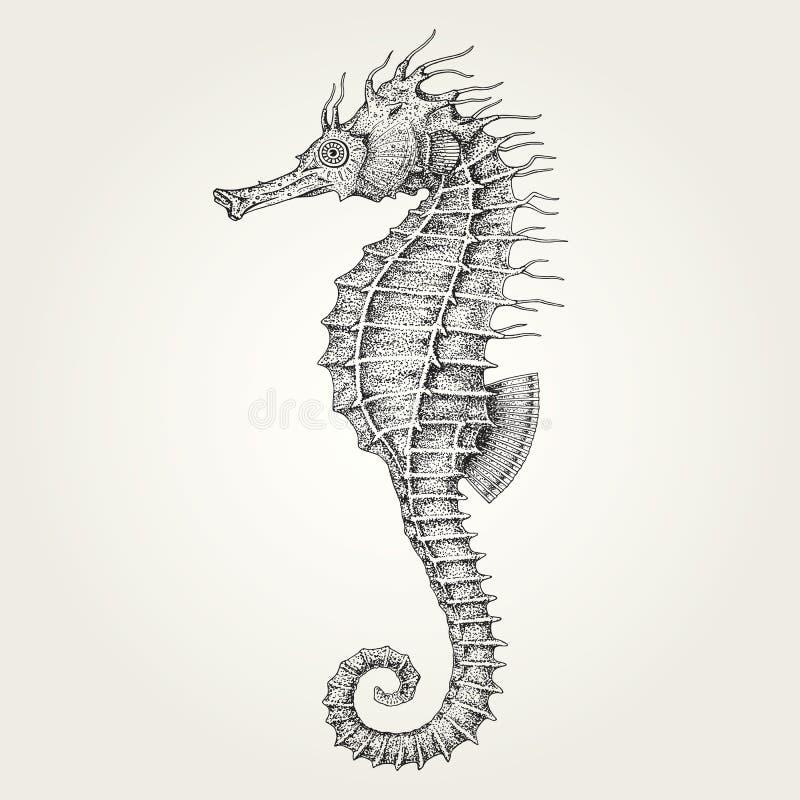 Seahorse dibujado mano ilustración del vector