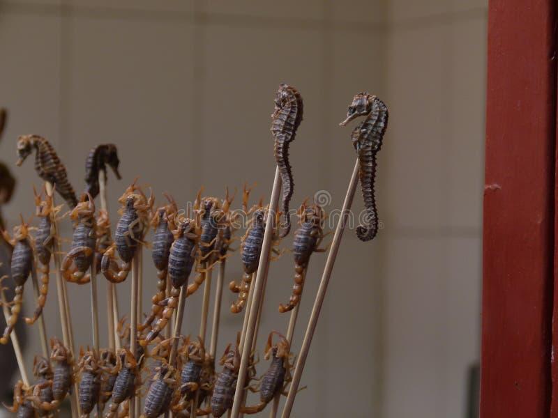 Seahorse na kiju jeść zdjęcia stock
