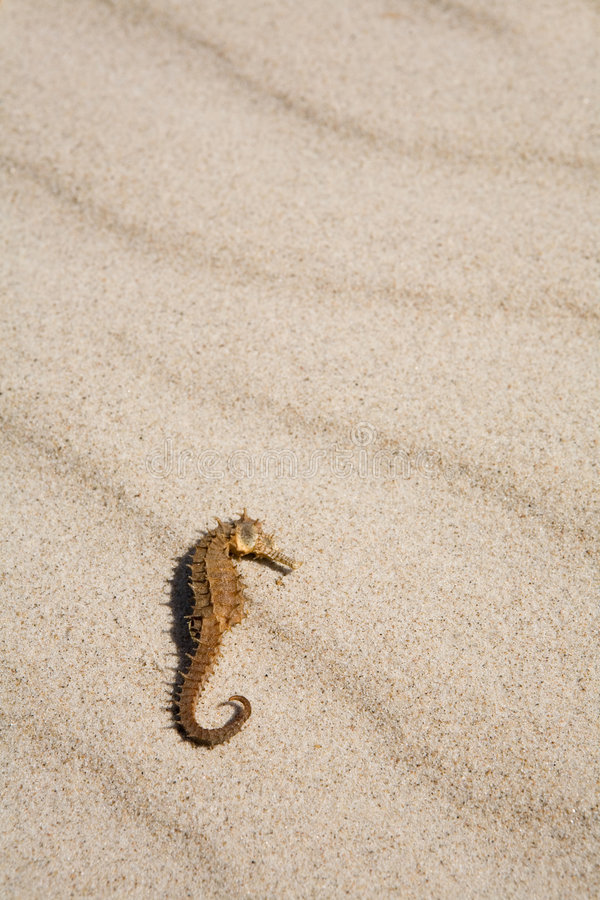 Seahorse op het strand stock foto's