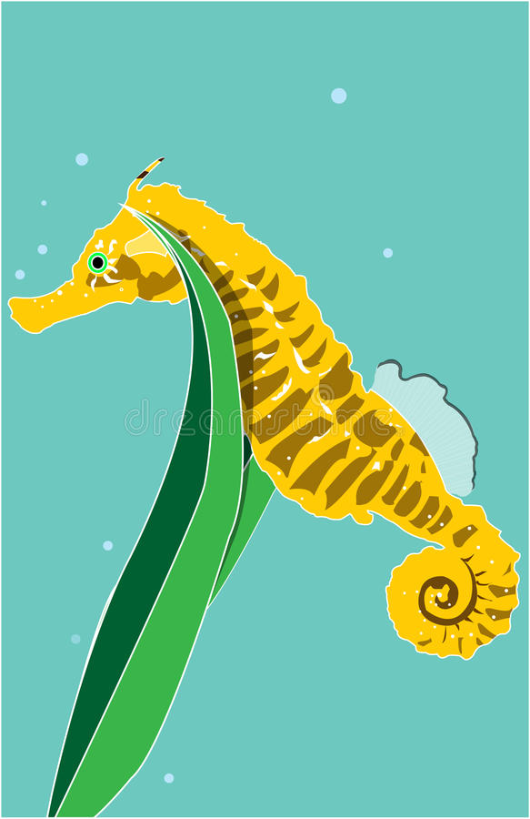 Seahorse royalty free stock images