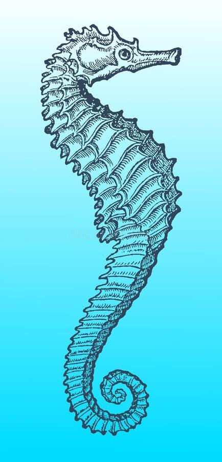 Seahorse in profielmening na een historische of uitstekende houtdrukillustratie van de 16de eeuw vector illustratie