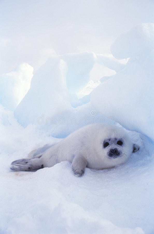 Free Seal Stock Image - 11027211