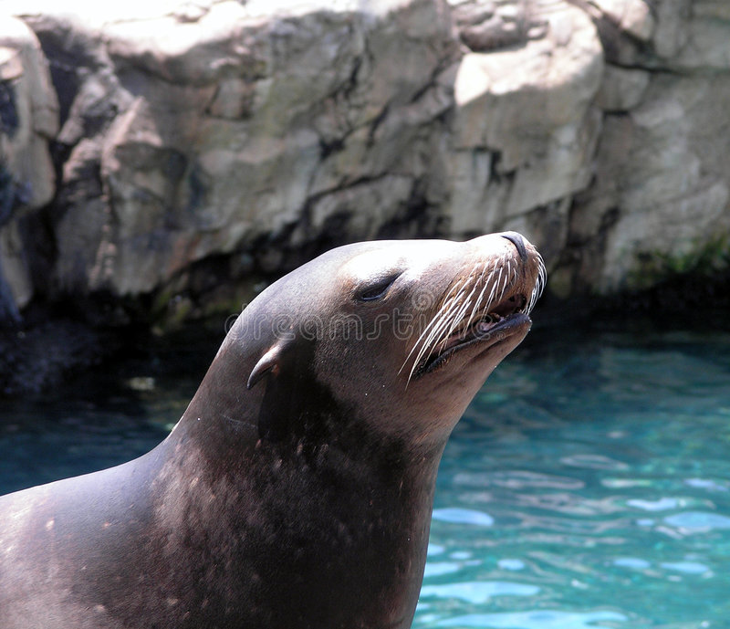 Download Seal Royalty Free Stock Images - Image: 192019