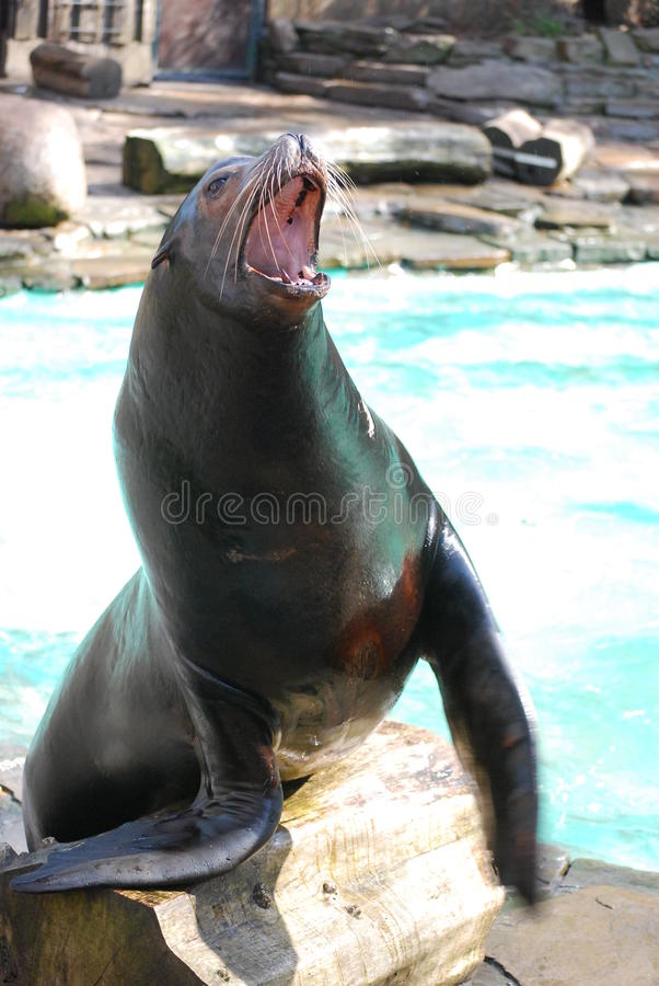 Free Seal Royalty Free Stock Photo - 20347905