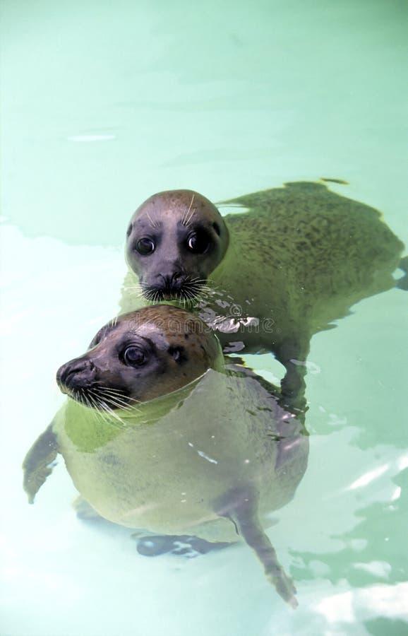 Free Seal Royalty Free Stock Image - 2790106