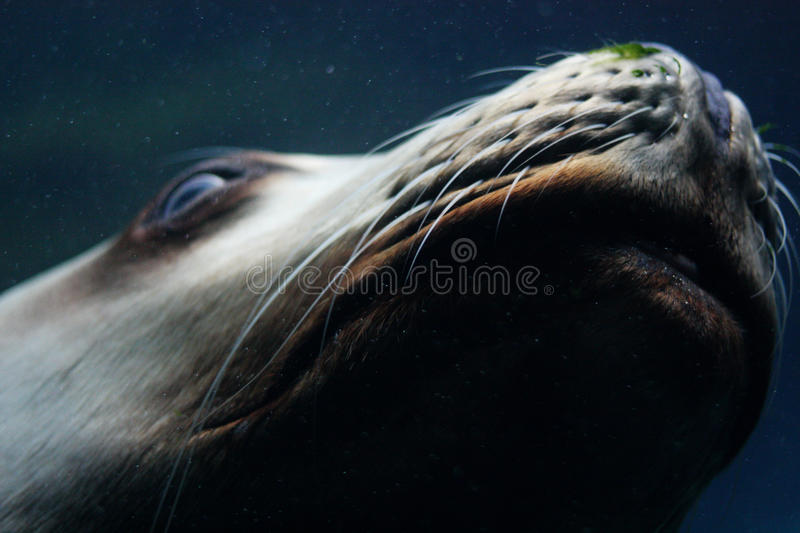 Seal face stock image