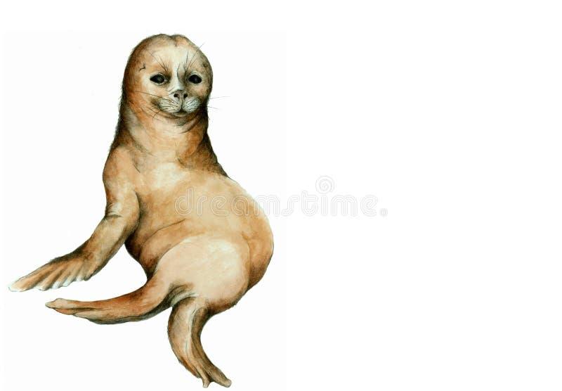 Download Seal Illustration stock illustration. Image of aquatic - 11560509