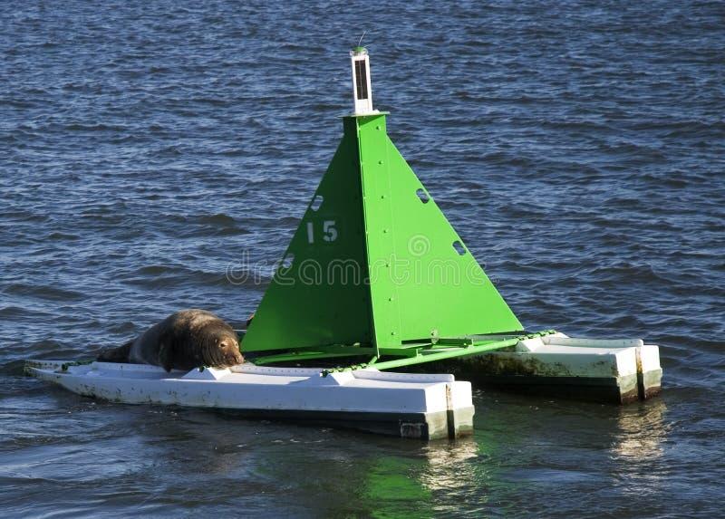 Seal on marker buoy royalty free stock photos