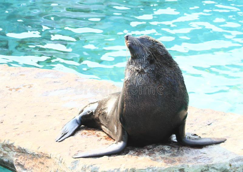 Download Seal Stock Photo - Image: 39445478