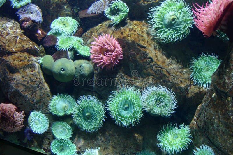 Sealife royalty-vrije stock foto's