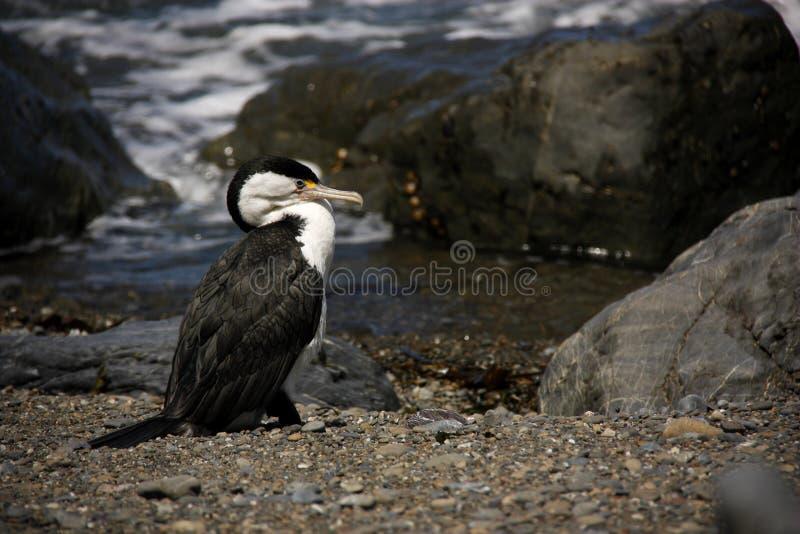 Download Sealife fotografia stock. Immagine di animale, roccie - 56888700