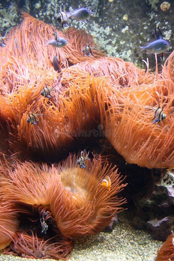 Sealife colorato fotografia stock