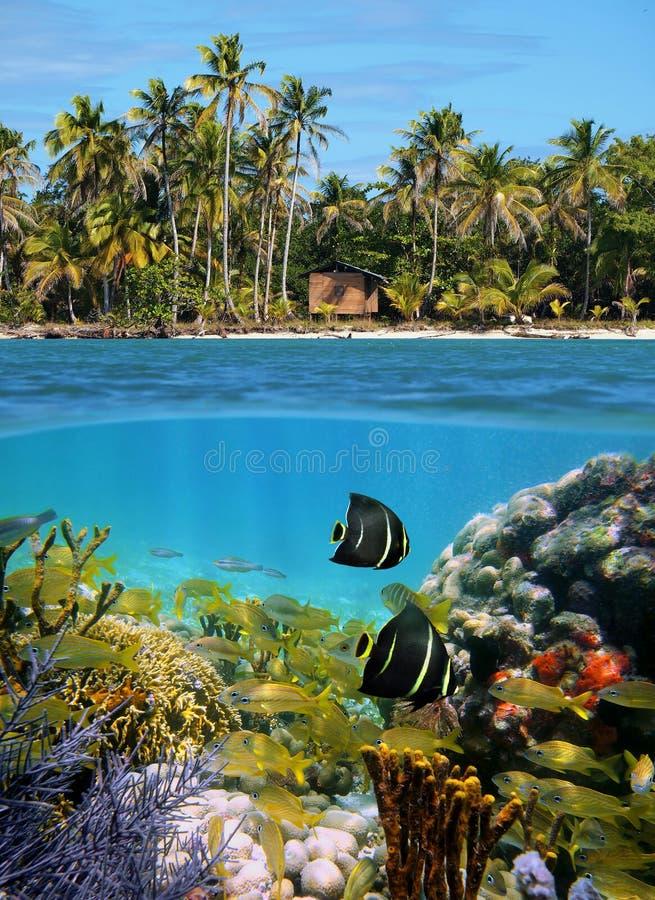 Sealife e praia tropical fotos de stock