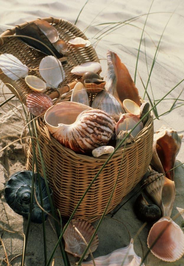 Free Sealife Picnic Royalty Free Stock Photos - 6116538
