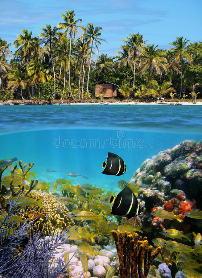 Download Sealife And Tropical Beach Stock Photos - Image: 23556383