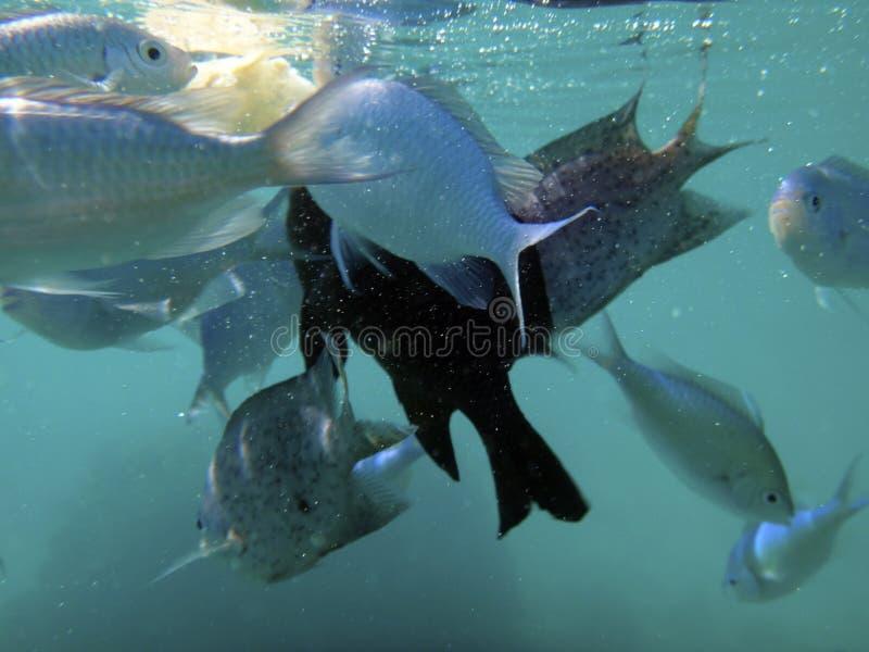 Sealife van Haven Vila Harbor, Efate, Vanuatu stock foto