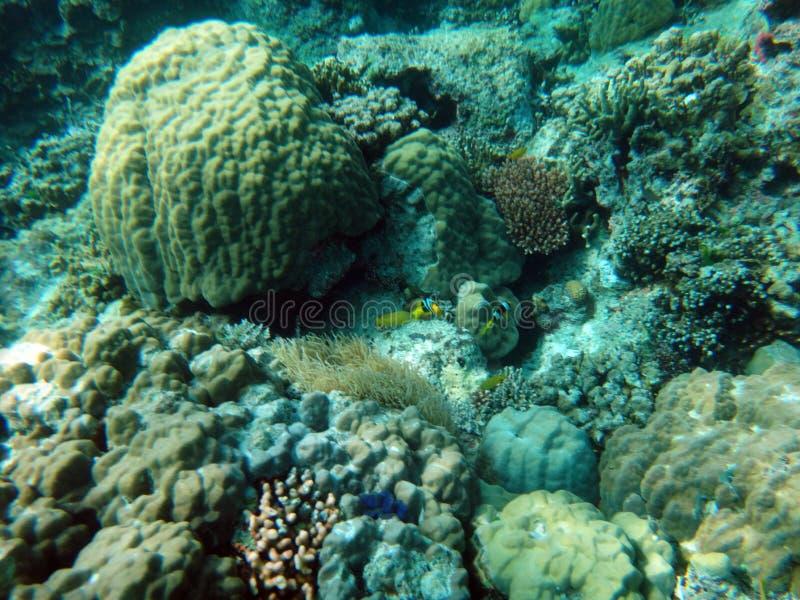 Sealife van Kalmteeiland, Efate, Vanuatu stock foto