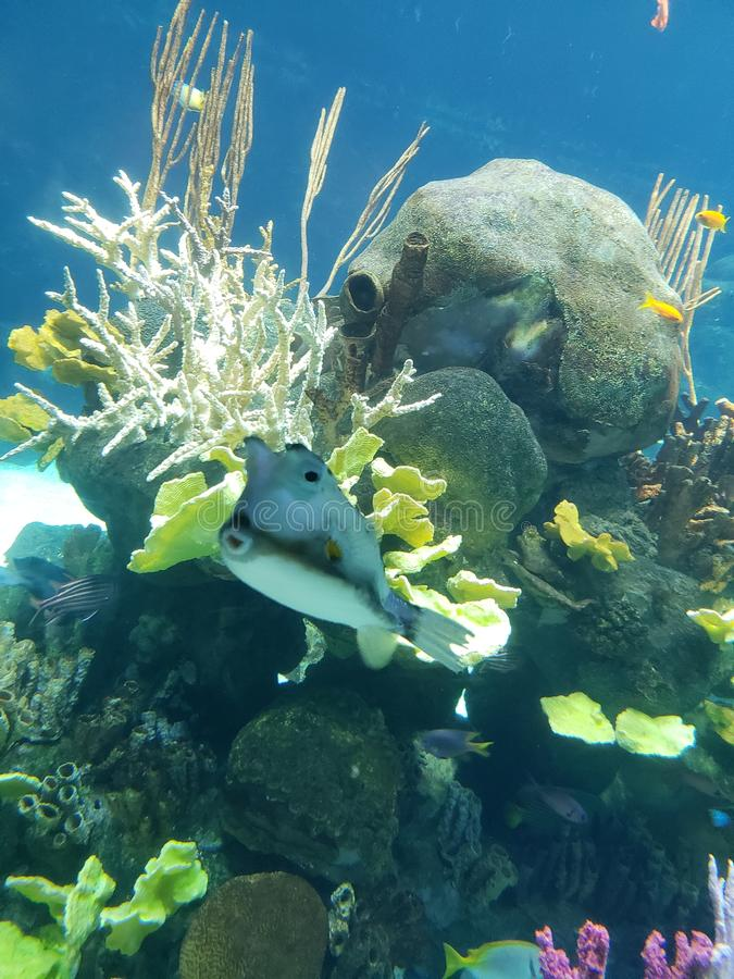 Sealife am Zoo lizenzfreie stockbilder