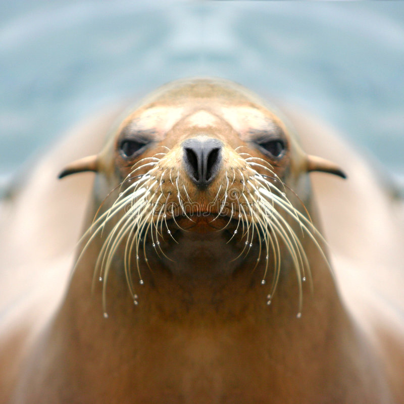 Free Sealion Stock Photo - 256990