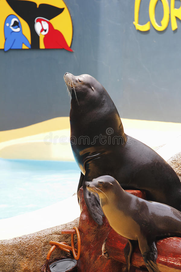 Free Sealion Show Royalty Free Stock Photo - 26300615