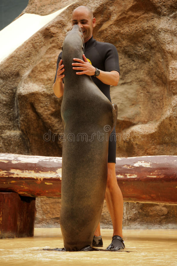 Sealion show in Loro Parque. Trainer with a sea-lion during show in Loro Parque in Tenerife, Spain stock images