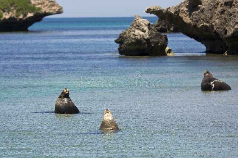 Seals stock photos