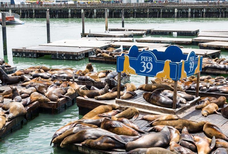 Seals at Pier 39 in San Francisco royalty free stock image