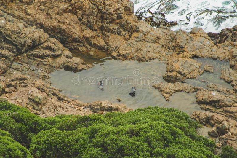 Seals resting on cliffs at Nugget Point viewpoint in Otago, South Island, New Zealand stock photos