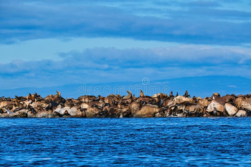 Seals on Rock Seawall. Over Blue Sea royalty free stock image