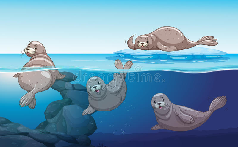 Seals swimming in the ocean royalty free illustration