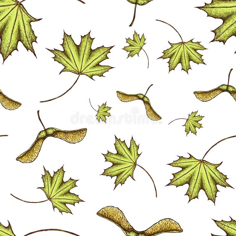 Seamles scolored o teste padr?o da folha de bordo e das sementes ilustração gravada colorida vintage da folha de bordo Folha verd fotos de stock