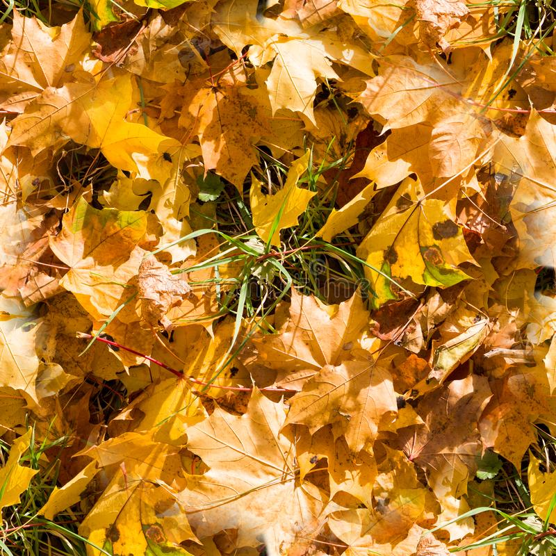 Seamless autumn leaves on the grass texture. background, nature. Seasonal royalty free stock photography
