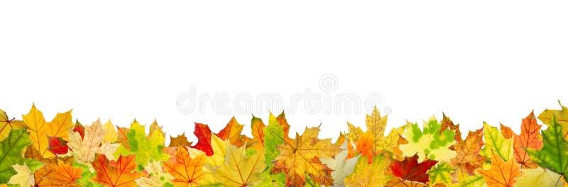 Seamless autumn leaves stock photos
